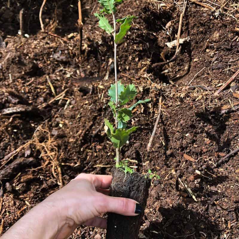 plantar1arvore